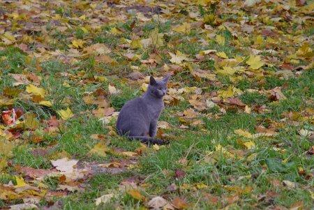Осень в городе - фотозарисовка — фото 4