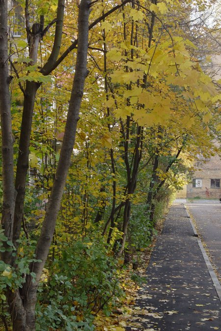 Осень в городе - фотозарисовка — фото 1