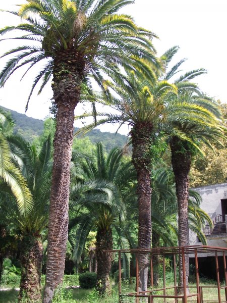 Абхазия. Парк и дворец принца Ольденбургского — фото 2